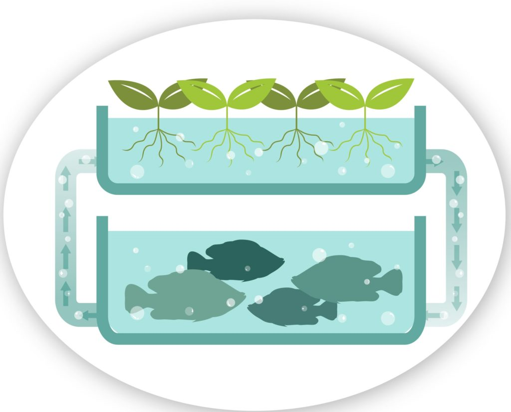 AQUAPONICS AN INTEGRATED SYSTEM OF HYDROPONICS AND AQUACULTURE AN  ALTERNATIVE FOR FOOD PRODUCTION IN AFRICA